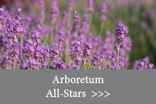 Arboretum All-Stars